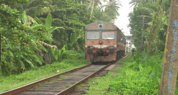 Le Sri Lanka, un havre de verdure propice aux découvertes
