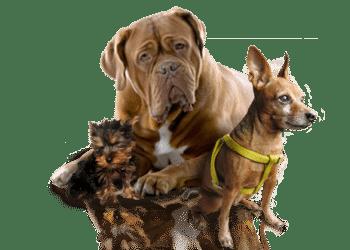 Croquettes chien pas cher, les meilleures pour votre toutou