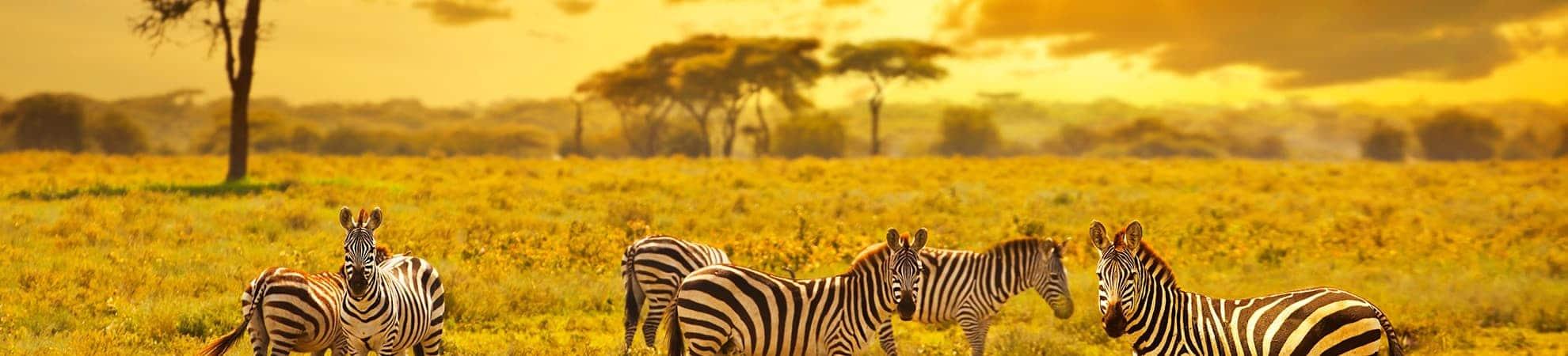 Les parcs du Nord de la Tanzanie