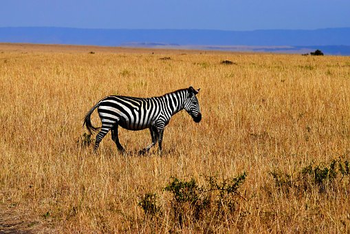 Le safari, une activité appréciée en Tanzanie