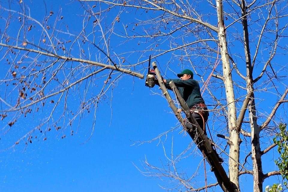 Quels sont les différents types d'élagage des arbres ?
