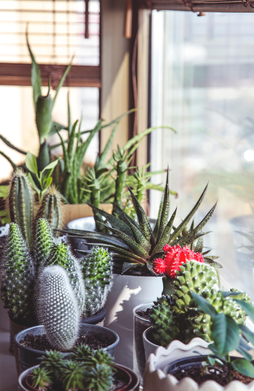 Quelle plante offrir pour un anniversaire?