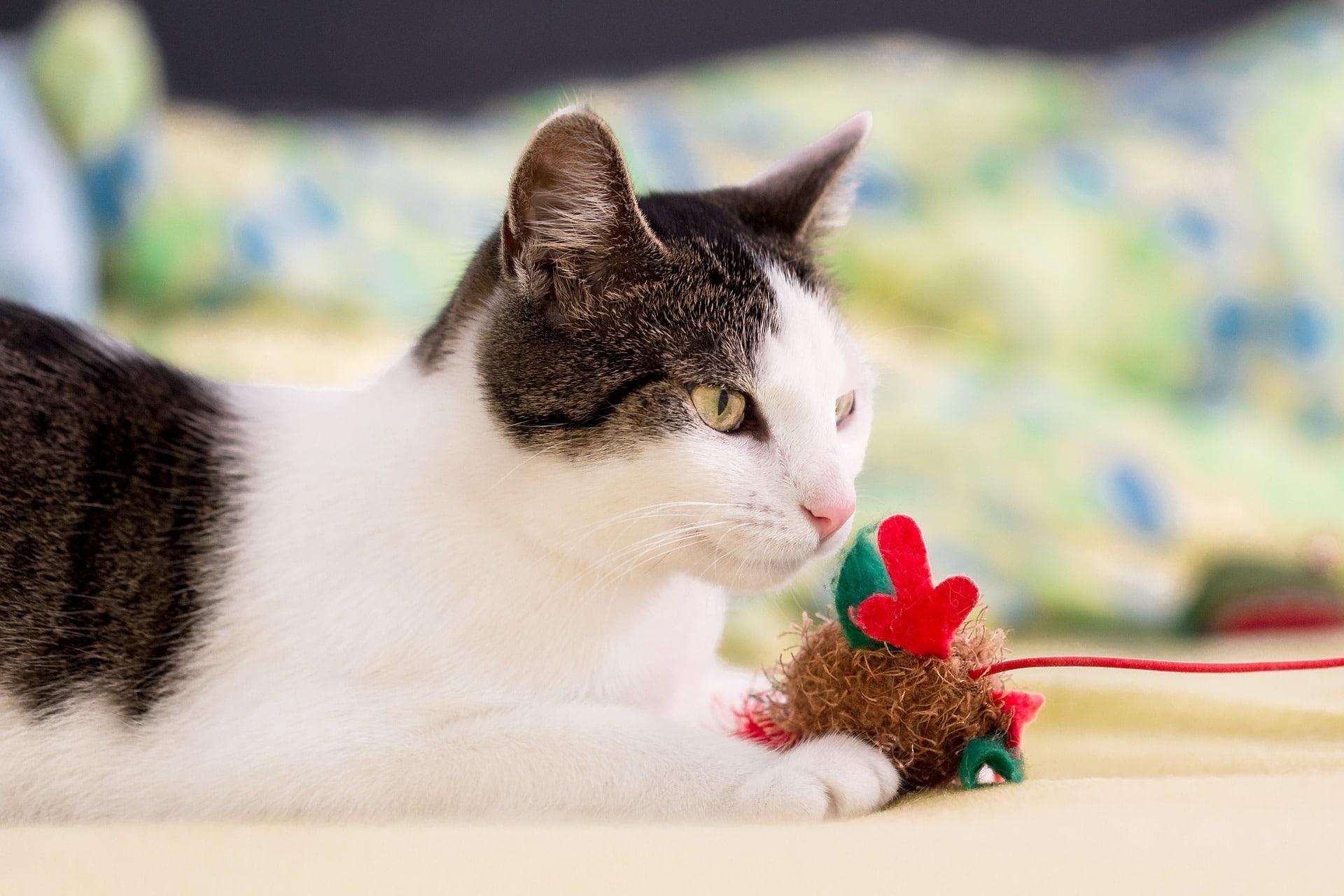 Un cadeau de Noël pour son chat